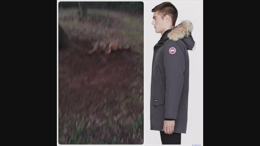 RT @peta: Coyotes bark just like dogs when they're scared. Even ones killed for fur trim. CC: @CanadaGooseInc [via Rob Banks] https://t.co/…