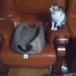Как правильно играться с котом. Инструкции специалиста. https://t.co/OC5TN4X5Zc
