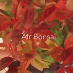 Watch Air #Bonsai in action on our latest YouTube showcase! https://t.co/glGHNEtZee #greentech https://t.co/PUTTrdY6qY