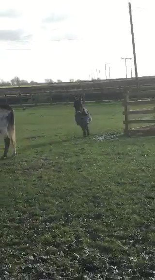 Nothing to see here, just the cutest video of a baby donkey discovering puddles you'll see today... https://t.co/gQlTaykaSD