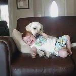 Bir köpek ve bir çocuğun kıskandıran arkadaşlığı ☺ #arkadaşınkralı https://t.co/CT0QeHjeEE