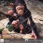 Patiently waiting for @HowToGetAwayABC to come back on tonight like this lil chimpanzee #HTGAWM #TGIT https://t.co/jeYSFTQyp4