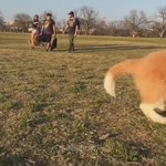 Puppies running in slow motion https://t.co/JMpbPfZEus