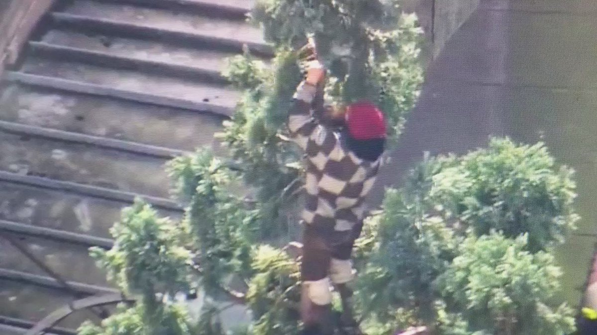 Dang it, #ManInTree I was with you until you started stripping our historic sequoia. Not cool. https://t.co/uLZcAskdjZ