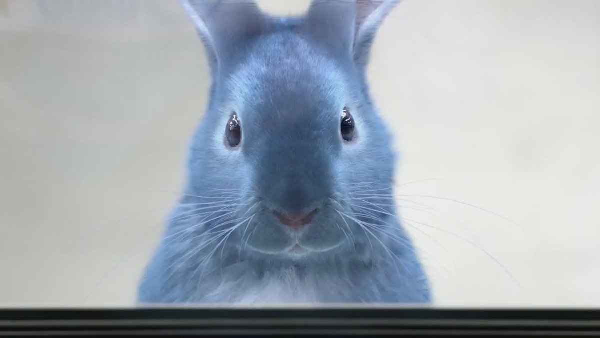 Blu's big television debut: check out our NEW commercial! We hope you'll agree it's #SoHoppinGood! https://t.co/UY8bSMQBCf