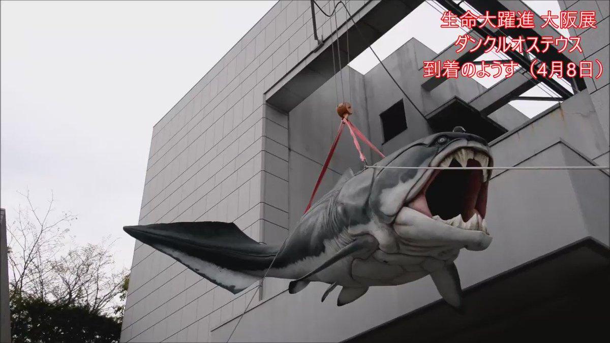 #生命大躍進 大阪展。ダイナミックで迫力ある、ダンクルオステウスの復元模型がお待ちしてます! 4月8日に長居公園・自然史博物館に到着したときの動画です。 https://t.co/Dgqt09GzEl