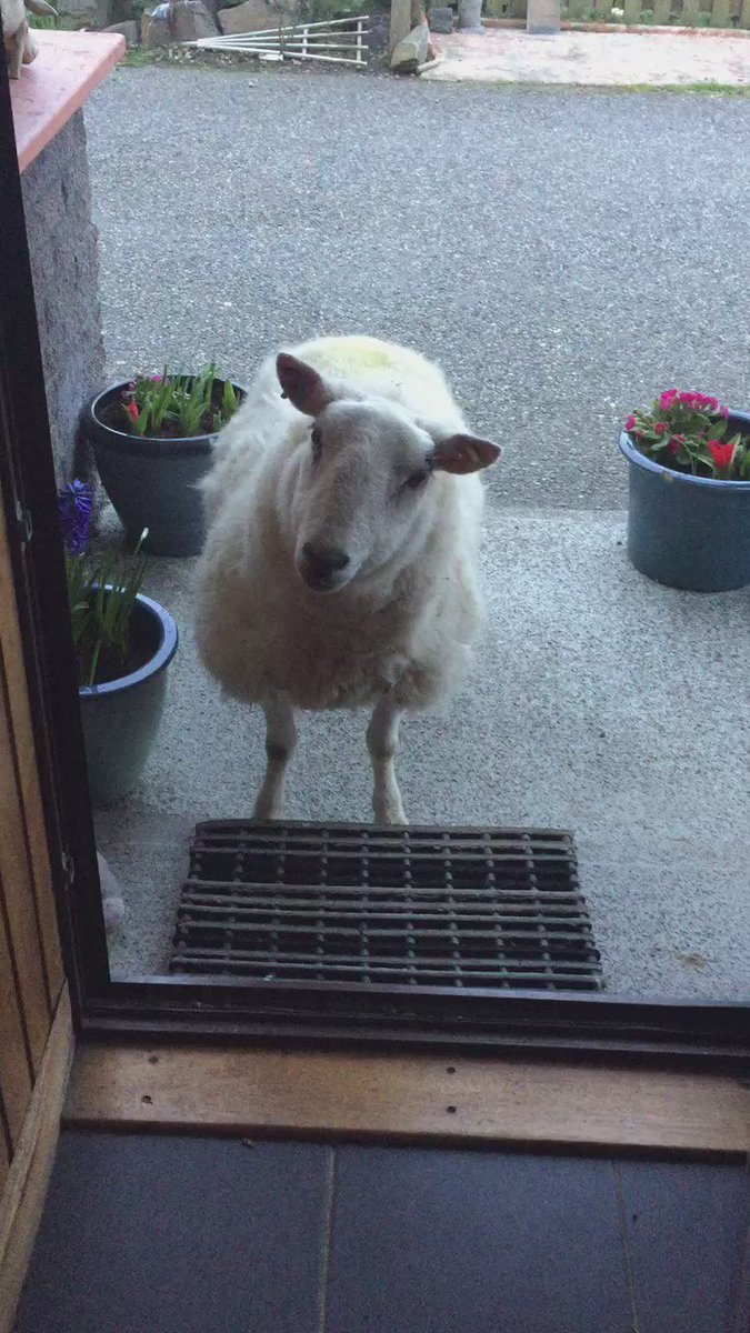 These door-to-door salesmen are out of control https://t.co/g9HRXUiBah