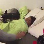احتاج واحد احطه عند باب غرفتي علشان محد يقعدني من النوم :  https://t.co/G3GyZLFtSy