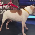 Rudy needs a home! Contact the #Buffalo Animal Shelter for more info. @WGRZ https://t.co/xcArI7Q8Ba