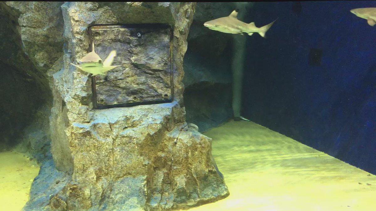 サメがふよふよしてる動画 https://t.co/FaKCloocBX