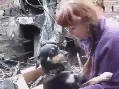 무너진 건물 잔해에서 구조된 <개는 자신의 구세주에게 감사하는 방법을 알고 있다> https://t.co/Er6AZYBNg3 https://t.co/KWZB8LG40v