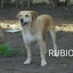 MUY URGENTE ACOGIDA!! #RUBIO 7 años,15kg solito junto a los otros 3 en S.Noe IRÁ LA PERRERA EN CUALQUIER MOMENTO https://t.co/JDHG7XDp4N..