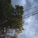 Viento de moderado a fuerte en #Saltillo, tome precauciones con árboles y espectaculares https://t.co/VXz6NsUATs