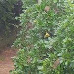 Good morning little monkey friends! Enjoy your breakfast. ???? #Muyenga #Kampala #Uganda https://t.co/ObQYGoQvSd