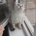 Aku rasa kucing ni nampak malaikat maut la.... https://t.co/HD79q6lUoJ