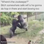 ???? PAUSE. You got me dead asf thinking Im bout to go in there with a Gorilla bare hands???? YOU can go get knocked out???? https://t.co/VhPYfyUbCr