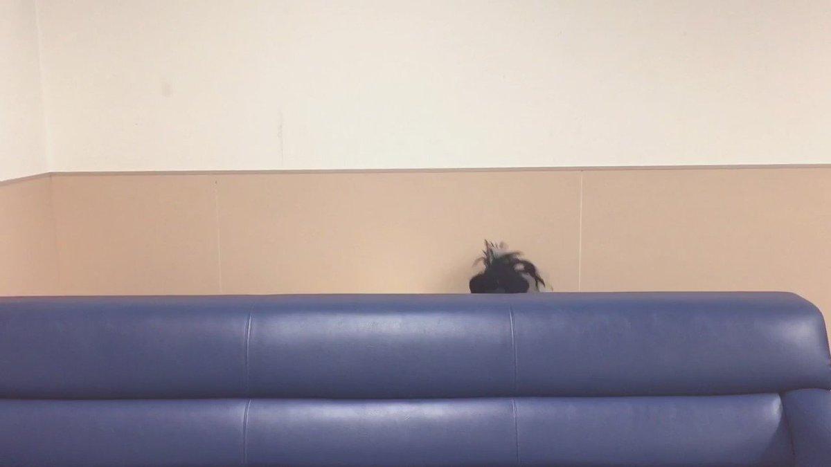 日本武道館公演、終了後の田村芽実よりメッセージ!彼女がファンの皆さんに伝えたかったこと。それは…?? 名作シリーズはこれで一旦終了です。ありがとうございました!【アンジュルム名作シリーズ『田村芽実』】 #アンジュルム #名作シリーズ https://t.co/P2Dl9ojuTN
