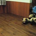 Детский сад для панд) https://t.co/b6XM6wBPDs