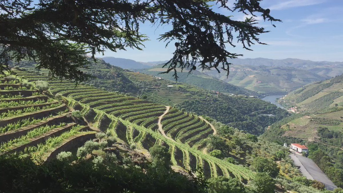 The Douro: first time here and it is truly amazing. https://t.co/AY4BmYwo76
