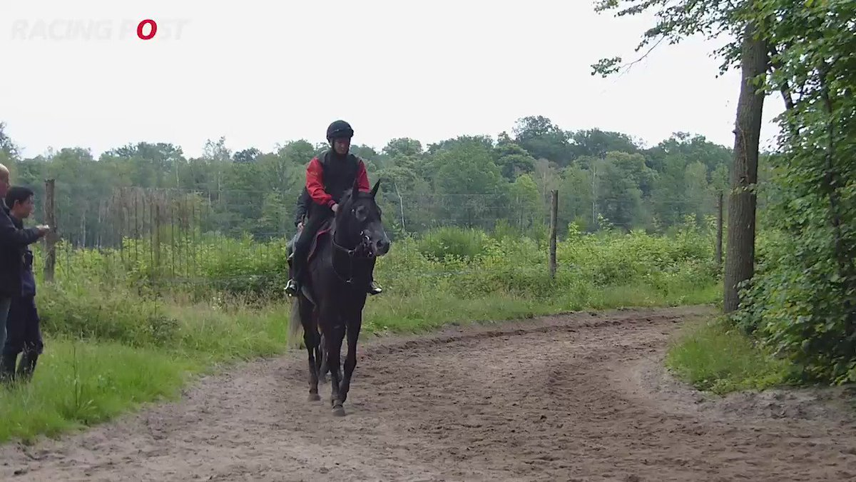 ICYMI: A Shin Hikari looked pretty good in his final piece of work before #RoyalAscot... https://t.co/9PizlGdM0y