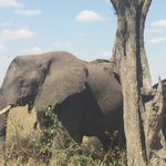 Our Africa travel specialist captured these adorable #elephants at the Serengeti National Park, #Tanzania. https://t.co/oj3NcaEOm0