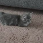 She was born with the bones missing from her front legs. But still cute tho 😭😻 https://t.co/cVhHk6MKAh