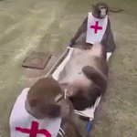 تدريب القرود على الإسعاف ...  يا عفو الله عالضحك https://t.co/we7HcuYgO4