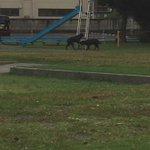 公園で犬がすべり台してました 笑 https://t.co/BfvCNZ83Kp