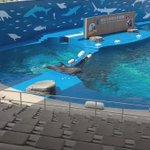 【仙台うみの杜水族館】相変わらずですが当館のイルカさんたちはフリーダムすぎて(・_・; #s_uminomori https://t.co/EsgS0M5RcN