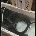 Good morning from #Tsukiji Fish Market! #midsummer #dayoftheox 築地市場からおはようございます! 夏ですね🌻 うなぎの季節です。#土用の丑の日 https://t.co/gD1bslWvE1