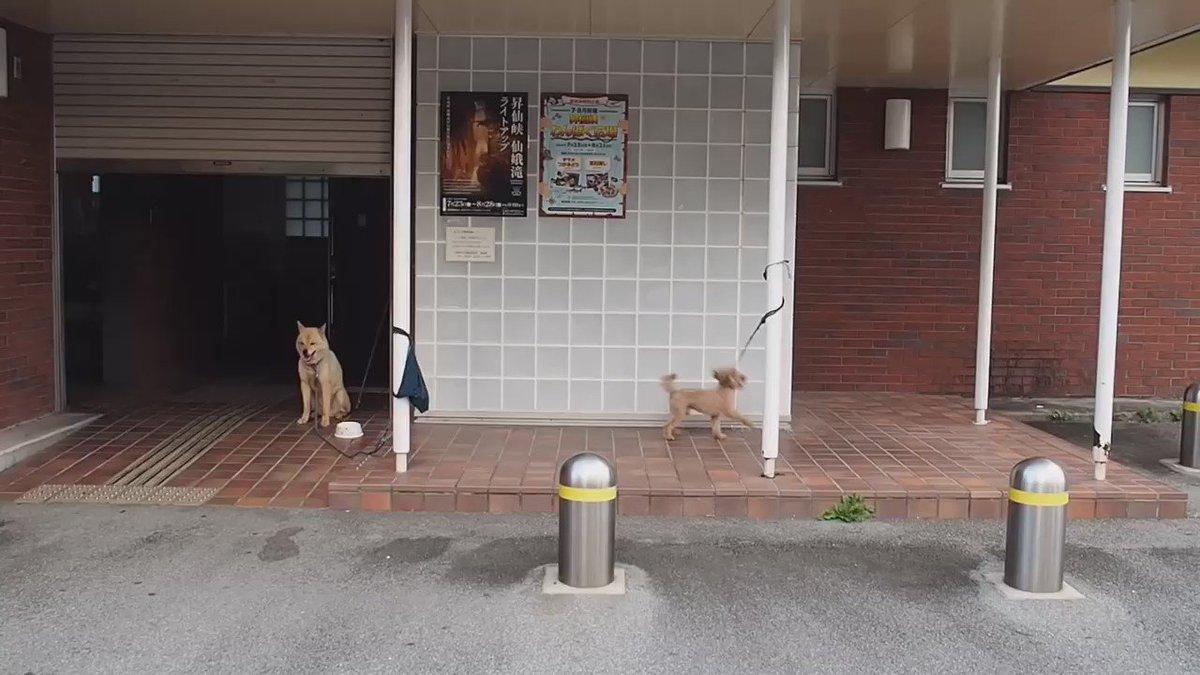 止まらない犬と止まったままの犬 https://t.co/paCt3ehfPD