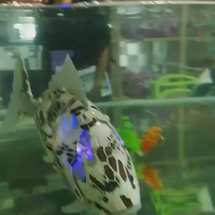 深センで韓国チームがつくってる魚ロボ、すげークオリティ高い! 15m潜れて10時間泳げる! https://t.co/2KRZ8plR7K