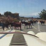 A rare nowadays sight & sound of #Cyprus. Evocative feelings. Yday near Droushia village, Paphos https://t.co/tEspTwqxMV