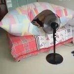 #Canicule Pour cette astuce, vous avez besoin de : ⬜️ Une housse de couette ⬜️ Un ventilateur https://t.co/Pug0iuE9fL
