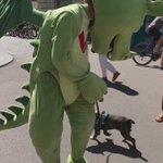 No big deal, just a dog chasing a dragons tail #TasteLjubljana #OdprtaKuhna https://t.co/YRyZylokL4
