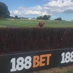 Rummy on #NationalDogDay kindly sponsored by @188BET @NewcastleRaces #chaserinthemaking https://t.co/bnXXJLva08