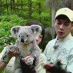 แจ็คสันกับโคอาล่า น่ารักมากๆๆๆๆๆๆๆ มีคุยมีจุ๊บหมีด้วย โง๊ย😍 https://t.co/omptg5u5mo