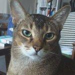 Kucing siapa suka buat muka macam ni? Hulur tangan je dia terus gesel kepala 👉🐈 Maow?😻  🙌🙌🙌🙌🙌🙌🙌🙌🙌🙌🙌🙌🙌🙌🙌🙌🙌🙌🙌🙌🙌🙌🙌🙌🙌🙌🙌🙌 https://t.co/oKV9g4DXiG