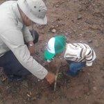 "Este pequeñín pese a que estaba ""atorado"", aprendió a plantar su árbol. Gran lección para el mañana #ReforestaPanamá https://t.co/yMmdwWN3UK"