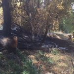 Grass fire on American River at N 5th contained. Three separate fires, arson investigators questioning suspect. https://t.co/2tE34w00N5