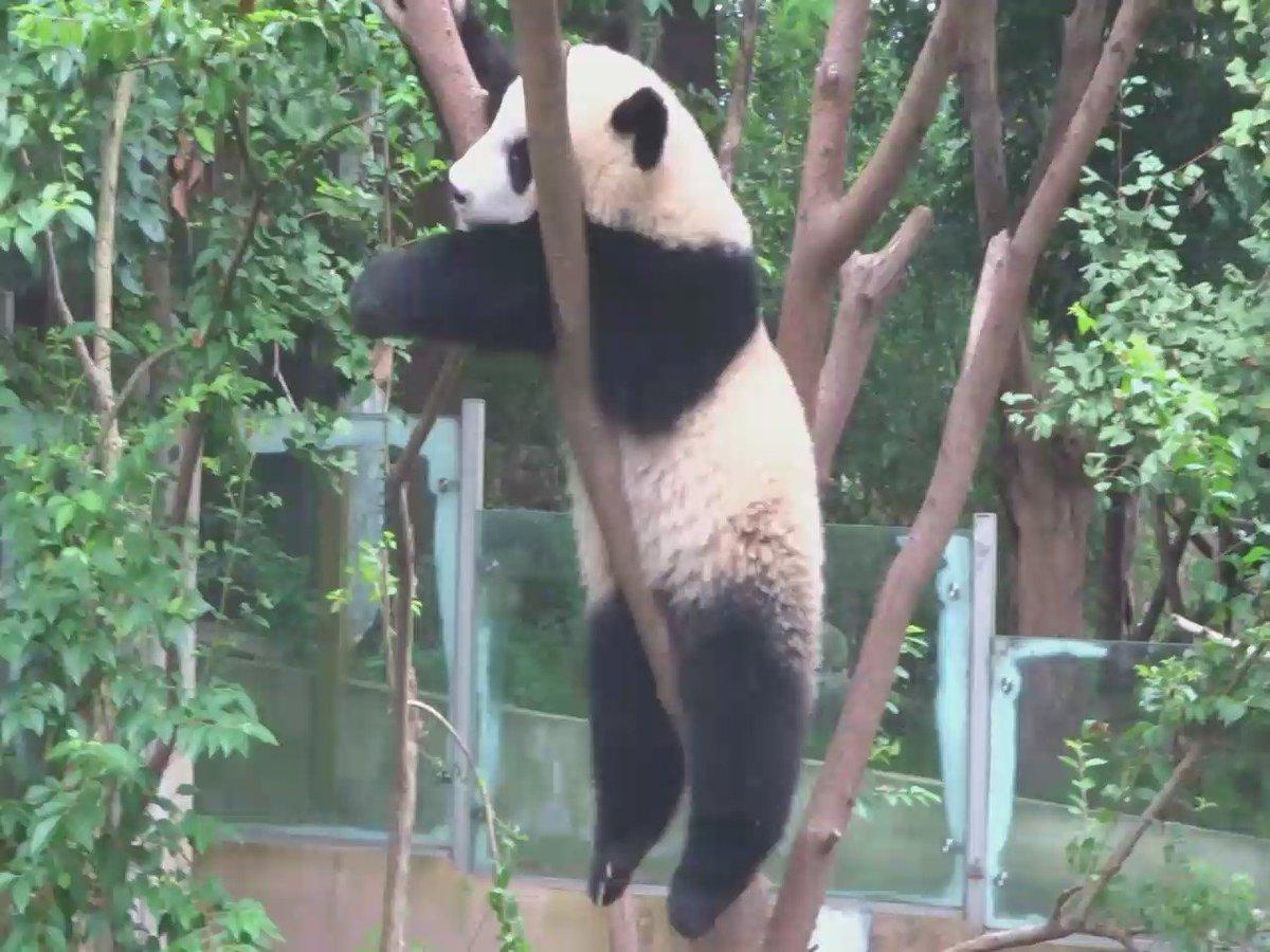 パンダが干されてました。 https://t.co/7dSPj2OS2S