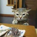 怒られるのは知ってるど食べたくて仕方ないみたい https://t.co/NM0RxzJeLG