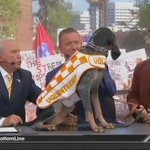Its official... at least according to Corso. #GoGators #UFvsTENN https://t.co/Efde67anQI
