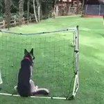 Encontramos al perro de Barovero. Le puso Gigliotti. https://t.co/7AGJOpmbES