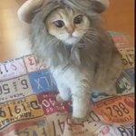 Cutest lion ever 😂😻 https://t.co/lnlcdetgGc