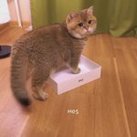 Gemuk tak sedar diri. Kau tak muatlah kucing dlm kotak tuuu 😂😂😂 #bulubulukehidupan https://t.co/s1w84Gonea