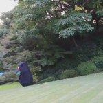 フランス大使公邸の庭園の芝生にくまもん @55_kumamon は大はしゃぎ。 pic.twitte…