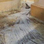 落水清掃中。カリフォルニアアシカ・リサちゃんの腹すべり。#桂浜水族館 pic.twitter.com…