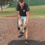 Quiero un canguro de mascota 😍😭😍 https://t.co/qFmASVB0Dq