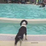 """A huge pool party JUST FOR DOGS is coming to Piedmont Park in the first weekend of October. Its called, """"The Splish Splash Doggie Bash"""". https://t.co/76AXqINxjS"""
